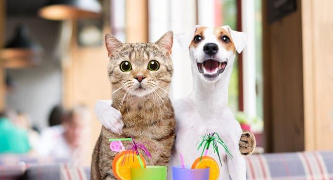 chó và mèo
