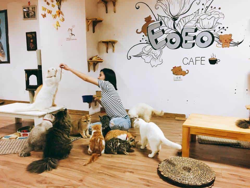 quán cafe chó mèo ở hà nội - EOEO coffee