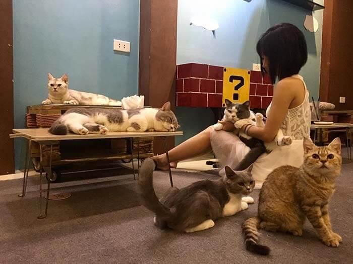 cafe mèo lizzy house