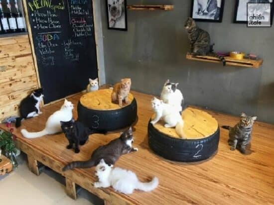 quán cafe chó mèo ở hà nội - meow coffee