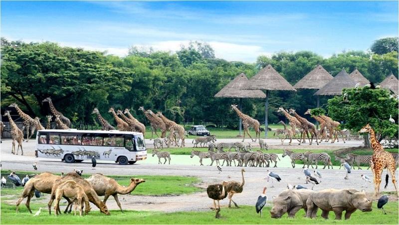 Vườn thú Safari – vườn thú bán hoang dã đầu tiên ở Việt Nam