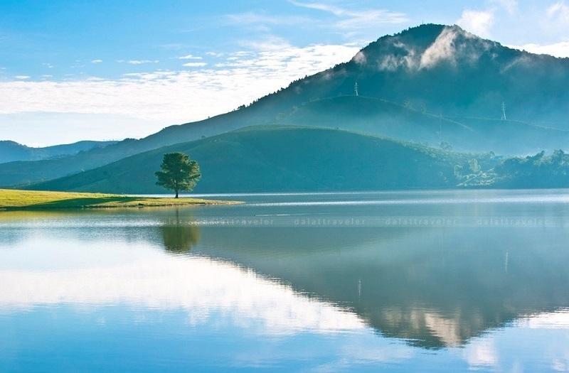 Cây Thông Cô Đơn - hồ Suối Vàng