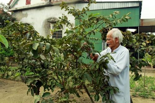 Các hộ dân đều xây dựng vườn cây để cho du khách thưởng thức, thăm quan