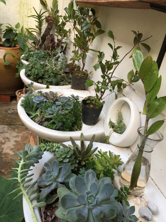 Dalat Sa - Lemongrass Homestay Đà Lạt